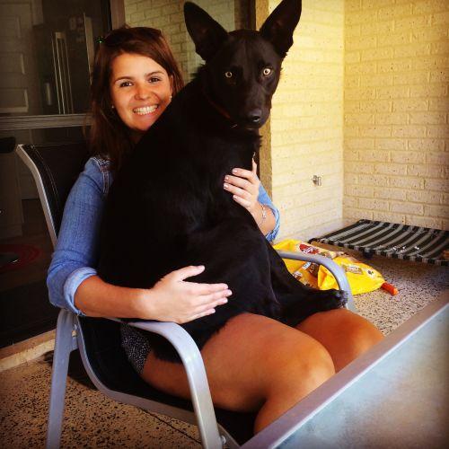 Amy S - Profile for Pet Hosting in Australia
