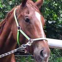 Lynelle Y - Profile for Pet Hosting in Australia