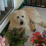 Vicki A - Profile for Pet Hosting in Australia
