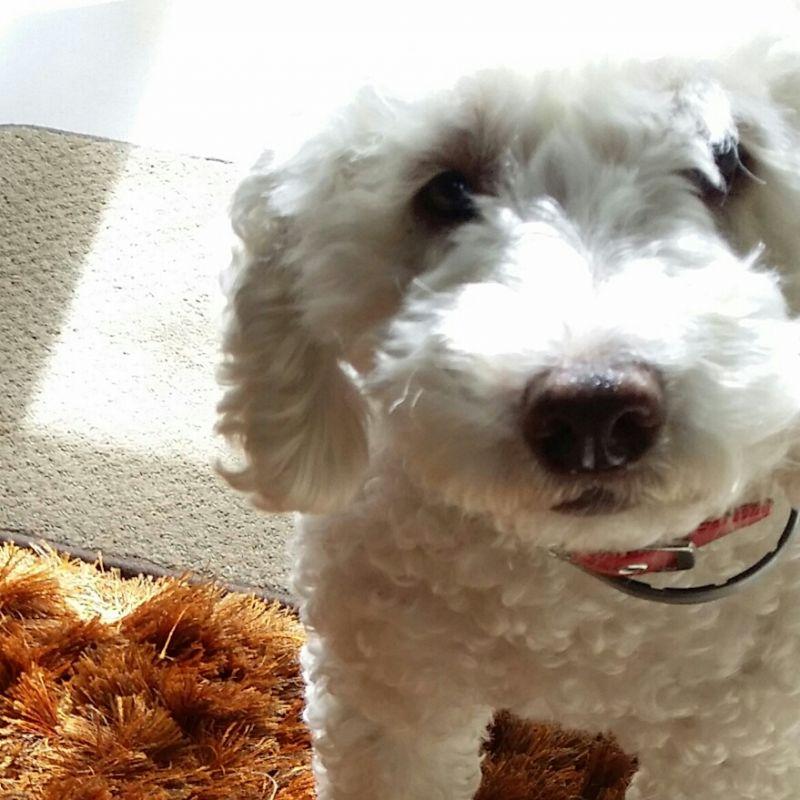 Sharon F - Review for Pet Hosting in Australia