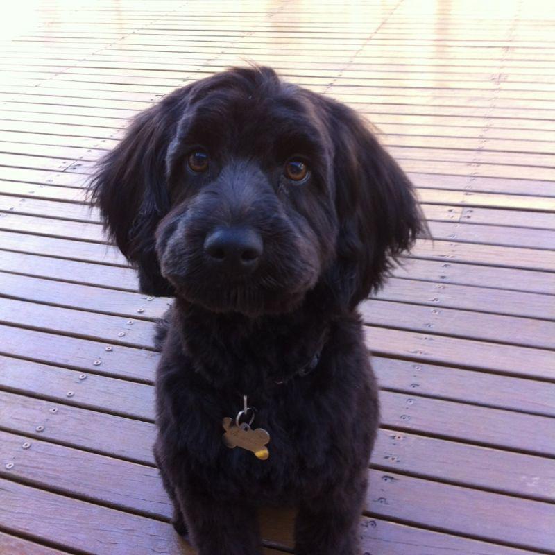 Craig D - Review for Pet Hosting in Australia