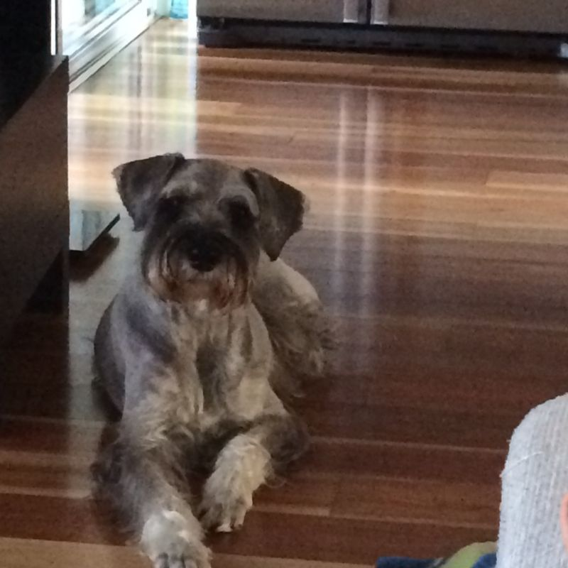 Roxana  P - Review for Pet Hosting in Australia