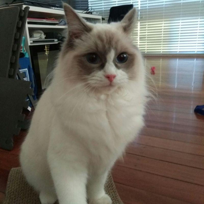 Kim L - Review for Pet Hosting in Australia