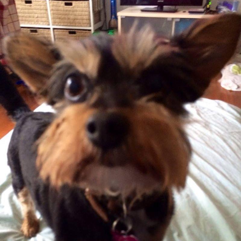 Kate D - Review for Pet Hosting in Australia