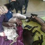 Amanda  O - Profile for Pet Hosting in Australia
