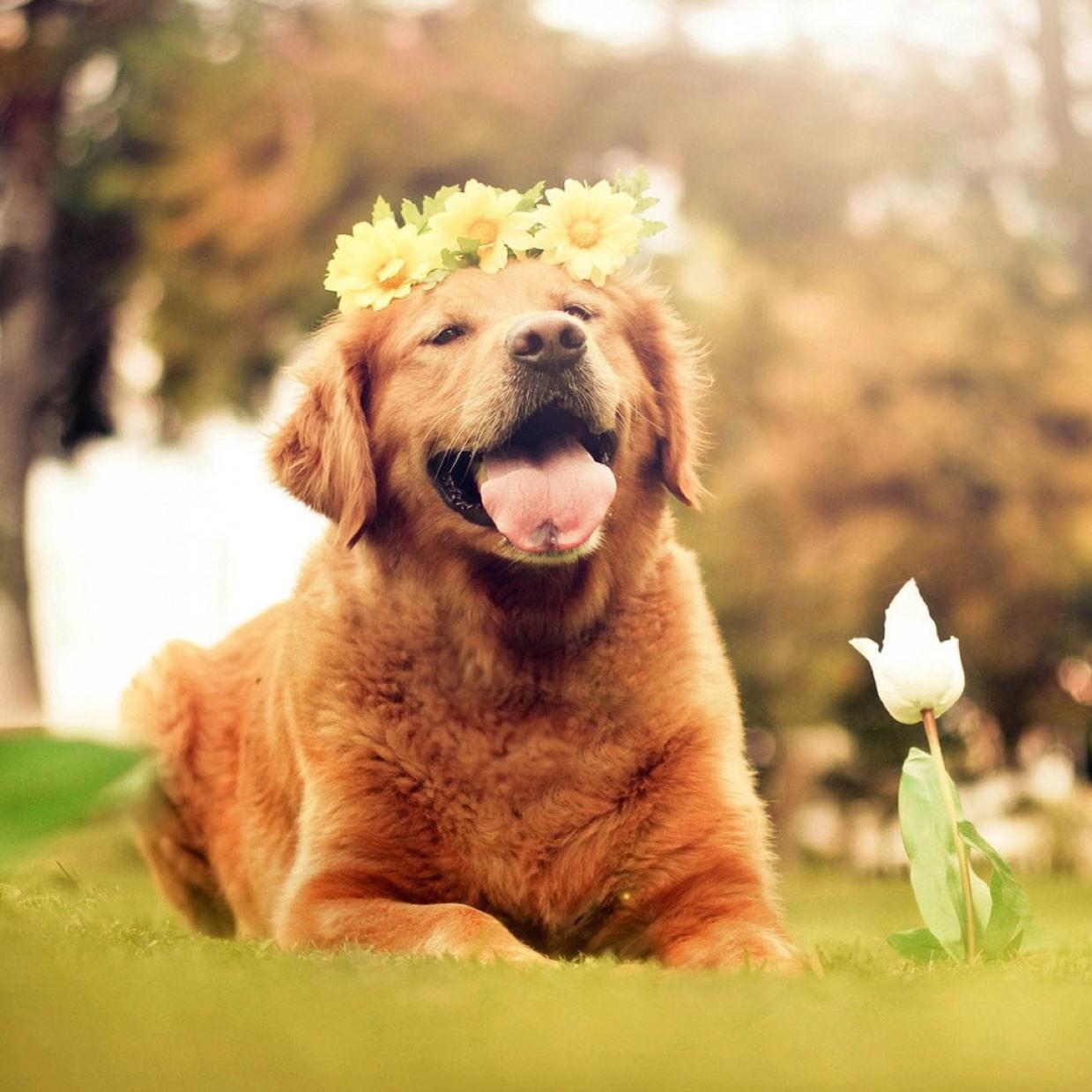 Owner M - Review for Pet Hosting in Australia