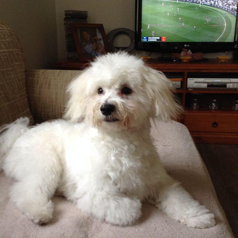 Michelle N - Profile for Pet Hosting in Australia