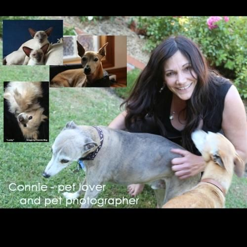 Connie M - Profile for Pet Hosting in Australia
